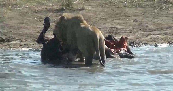 Hayvanlar dünyasından vahşi kareler