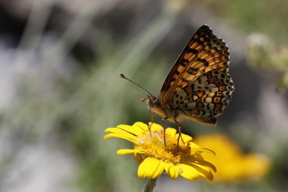 220 çeşit kelebek türü o ilimizde kanat çırpıyor