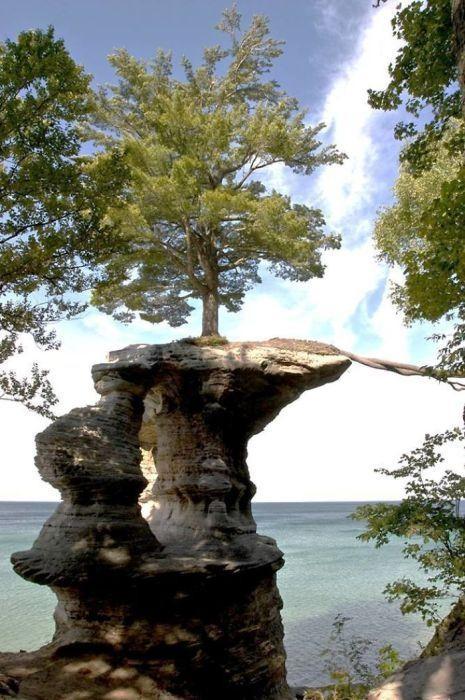 Dünyanın en sıra dışı ağaçları
