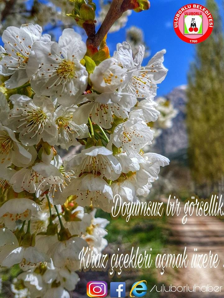 Isparta'da kiraz ağaçları böyle çiçek açtı!Muhteşem Manzara